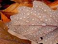 Autumn Vibe (237328159).jpeg