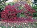 Autumn colour, Bute Park, Cardiff - geograph.org.uk - 1027289.jpg