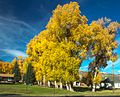 Autumn colours in SW Utah - along Hwy 72, Utah (15653965045).jpg