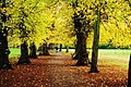 Autumn gold Beddington Park, London Borough of Sutton.jpg