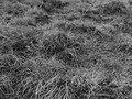 Autumn grass - geograph.org.uk - 605701.jpg