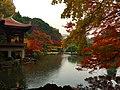 Autumn leaves in Tokyo.JPG