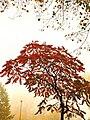 Autumn tree..jpg