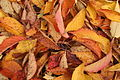 Autumnnleaves.JPG
