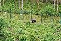 Bad Rippoldsau-Schapbach Alternativer Wolf- und Bärenpark Schwarzwald Bär.jpg