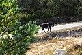 Baltar, Province of Ourense, Spain - panoramio (26).jpg