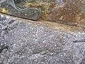 Baraboo Quartzite (upper Paleoproterozoic, ~1.7 Ga; just north of Rock Springs, Wisconsin, USA) 6 (18599614139).jpg