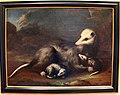 Bartolomeo bimbi, opossum con due piccoli.JPG