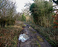 Barton Stacey - Track to Sutton Scotney - geograph.org.uk - 654550.jpg