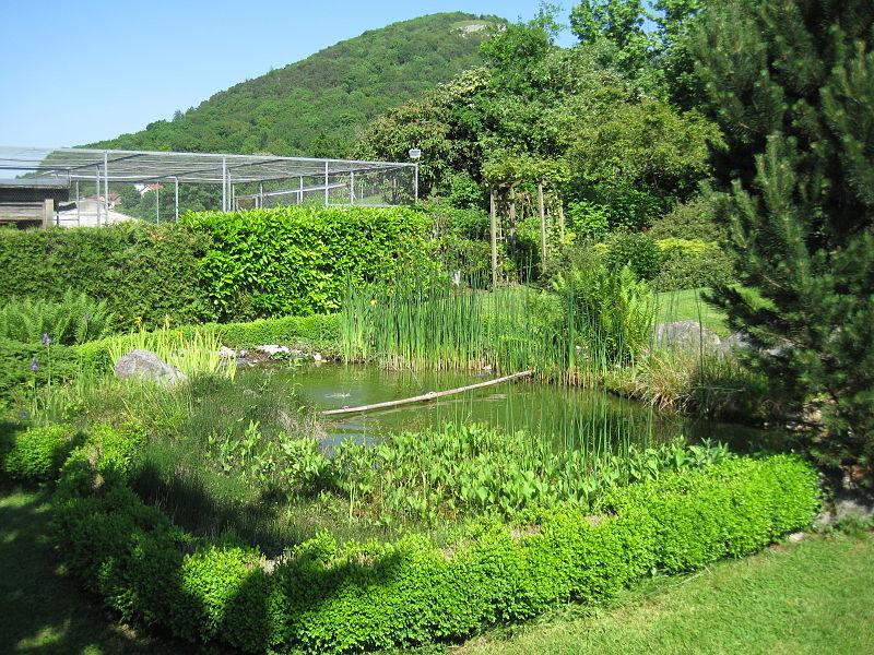 File:Bassin de jardin 0005.jpg - Wikimedia Commons