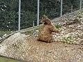 Bear (2379585799).jpg