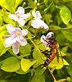 Bee bee 2.jpg