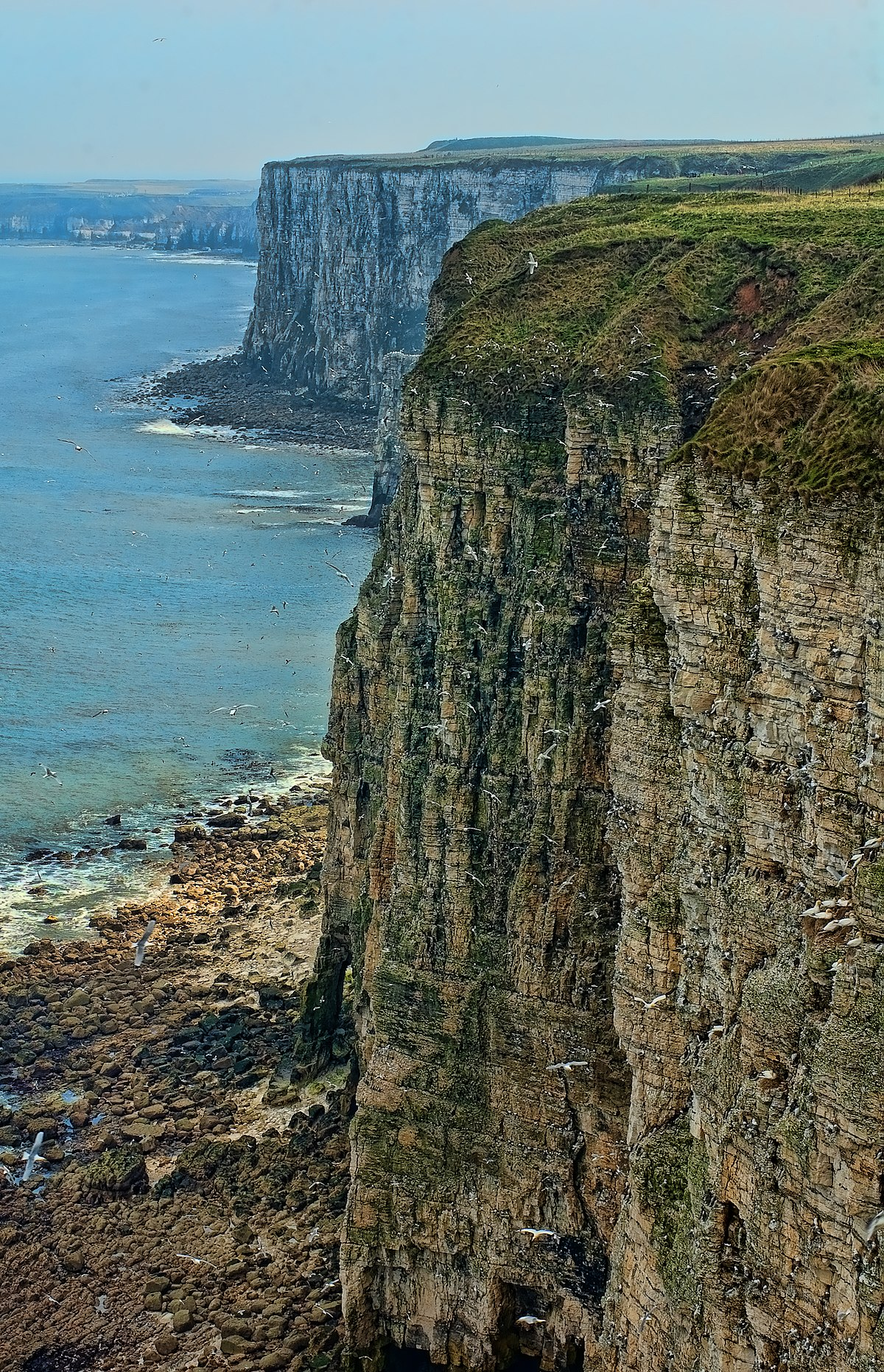 A big Skydiving Leap of Faith at the island cliff ( ROLEPLAY)  1200px-Bempton_Cliffs_RSPB_nature_reserve