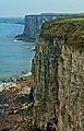 Bempton Cliffs RSPB nature reserve.jpg