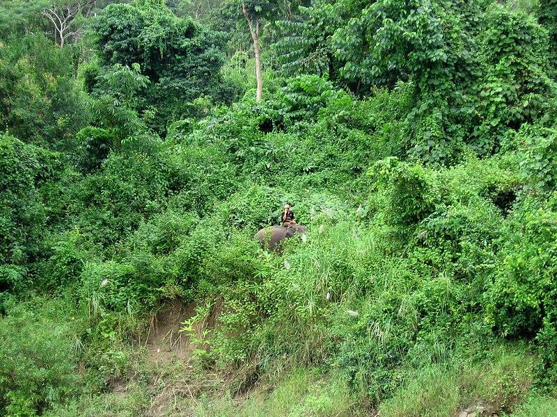 File:Bhamo-ayeyarwady-d08.jpg