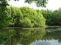 Bildhäuser Wald - panoramio - Rhöntommy (1).jpg