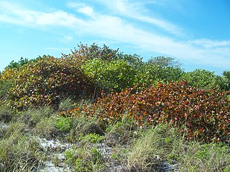 Bill Baggs Cape Florida State Park - Image: Bill Baggs SP01