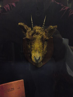 Manchester United F.C. mascots - Billy the Goat's preserved head on display in the Manchester United museum