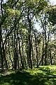 Birch Woods - geograph.org.uk - 1369143.jpg