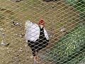 Bird Park in Kuala Lumpur (Malaysia) (11).jpg