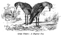 Bird Watching (Selous) Chapter 1 - Illustration 2.png