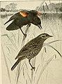 Bird lore (1907) (14569191857).jpg