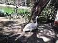 Birds20171111 131826.jpg