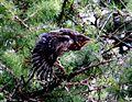Birds Prešov16Slovakia7.JPG