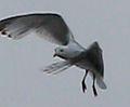Birds of Amsterdam-8.jpg