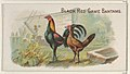 Black Red Game Bantams, from the Prize and Game Chickens series (N20) for Allen & Ginter Cigarettes MET DP835058.jpg