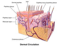 Der dunkle Fleck auf der Haut die Symptome