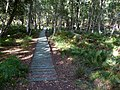 Boardwalk on nature trail at Arne reserve - geograph.org.uk - 1769407.jpg