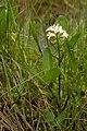 Bog Flower.jpg