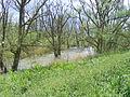 Bomen staande in water Biesbos.JPG