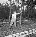 Bosbewerking, arbeiders, boomstammen, duwen, Bestanddeelnr 251-9115.jpg