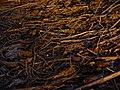 Bosc de Can Deu el 2004 19.jpg