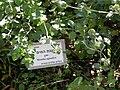 Botanical Garden of Mount ScopusDSCN4678.JPG