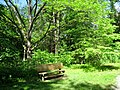 Botanical Gardens at Asheville - bench.JPG