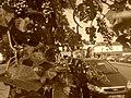 Botanique urbaine à Evreux 5.jpg