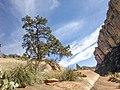 Boynton Canyon Trail, Sedona, Arizona - panoramio (111).jpg