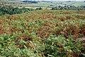 Bracken on Gibbet Moor - geograph.org.uk - 553999.jpg