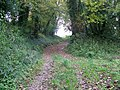 Bridleway, Cheselbourne - geograph.org.uk - 1038323.jpg