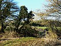 Bridleway north of Compton Bassett - geograph.org.uk - 1172938.jpg