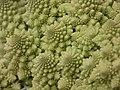 Broccoli DSCN4572.jpg