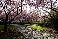 Brooklyn Botanic Garden.JPG