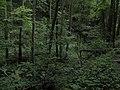 Bubovice-Srbsko - panoramio (48).jpg