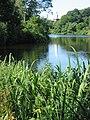Bullough's Pond 109 0933 r1.jpg