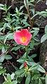 Bunga tukang taman madiun.jpg