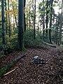 Burgstelle Hadlikon 62.jpg