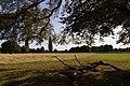 Bushy Park - panoramio - Alexey Komarov (2).jpg